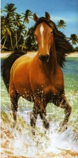 cheval à la plage